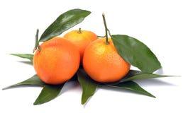 Clementines med segment med sidor Arkivbild
