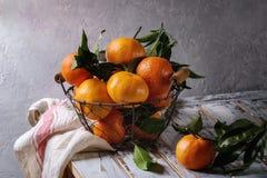 Clementines med sidor Arkivfoto
