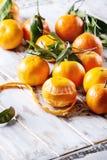 Clementines med sidor Royaltyfri Fotografi
