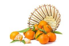 Clementines odizolowywający obrazy royalty free