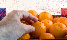 Clementines Touch. A hand grabs a clementine Royalty Free Stock Photography