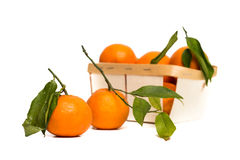 Clementines in a wooden box at white background Stock Photo