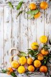 Clementines z liśćmi Obrazy Stock