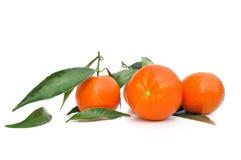 Clementines z liściem fotografia royalty free