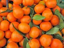 Clementinesinaasappel Stock Afbeeldingen