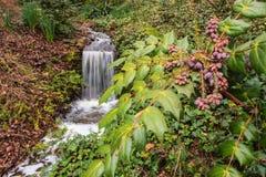 Clemson SC Botanical Gardens Stock Images