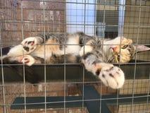 Cleo die Katze - Einschließung im Freien Lizenzfreies Stockbild