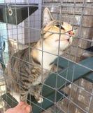 Cleo die Katze in ihrer Einschließung Stockfoto