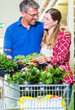 Clerk attending customer in garden center Stock Image