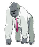 Clerk gorilla Stock Images