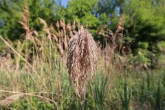 Cleveland Lakefront Nature Preserve images stock