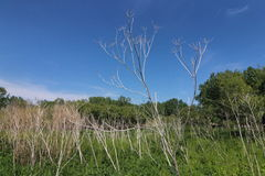 CLEVELAND LAKEFRONT NATURE PRESERVE Royalty Free Stock Photography