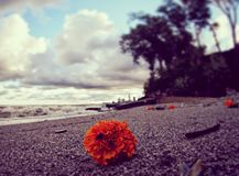 An orange flower rests on the stony beaches of Cleveland, Ohio - OHIO - USA. Cleveland is a major city in Ohio on the shores of Lake Erie. Landmarks dating to royalty free stock photography