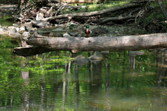 The Cleveland Metroparks Stock Image
