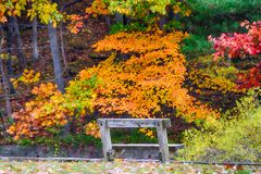 Cleveland Metroparks in the fall. A lonely bench, surrounded by the colors of Fall in the Cleveland Metroparks. A place to enjoy the views Stock Photo