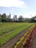 Cleveland Skyline Organic Garden. A picture of the Cleveland skyline taken at a local organic garden where they sell fresh produce royalty free stock photography