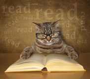 The clever cat with glasses reads a book royalty free stock image
