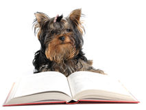 Clever dog Stock Photo