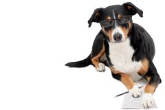 Clever dog with glasses and pencil. Clever Appenzeller Mountain dog with glasses and pencil royalty free stock photo