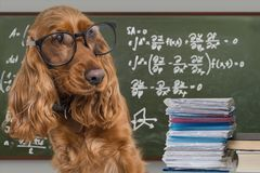 Clever funny dog wearing eyeglasses. Math equations on blackboard in background Royalty Free Stock Photography