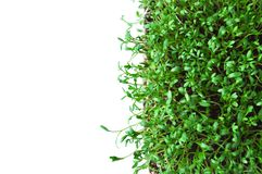 Clever healthy food greens. Microgreen cress salad Lepidium sativum. Annual plant, widely used in medicine and cooking. Dietary vegan food stock photography