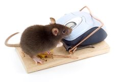 Clever Mouse Royalty Free Stock Photos