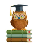 Clever owl sitting on books education Royalty Free Stock Photography