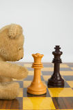 Clever Teddy. A smart teddy bear playing chess Royalty Free Stock Photography