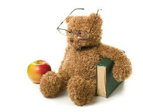 Clever teddy bear Stock Photos