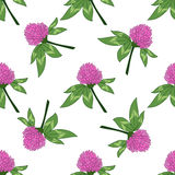 Clever trefoil vector seamless pattern Stock Images