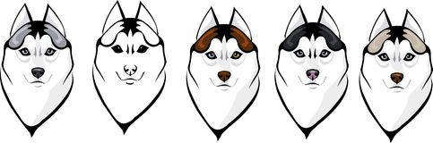 Clever wolf. Vector illustration of different variants of a wolfs head Royalty Free Stock Photography