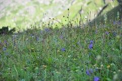 Clic de vallée de fleur photo stock