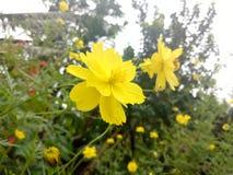 Clic del fiore Immagine Stock