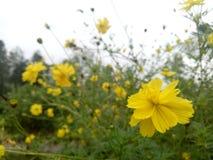 Clic del fiore Fotografia Stock