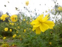Clic del fiore Immagini Stock Libere da Diritti