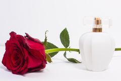 A surprise gift for a woman. Cliche gift for a woman, a red rose and an expensive perfume Royalty Free Stock Image