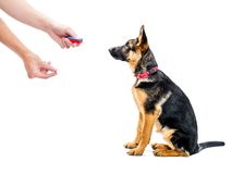 Clicker training Stock Photo