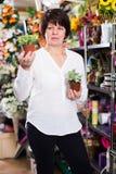 Client choisissant le bégonia Photographie stock