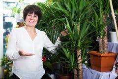 Client choisissant le meilleur yucca Photographie stock