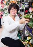 Client de femme décidant du meilleur bégonia Photographie stock libre de droits