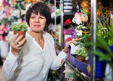 Client féminin choisissant le meilleur bégonia pour acheter Photographie stock