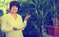 Client féminin gai de sourire choisissant le meilleur arbre de yucca pour acheter Photo libre de droits