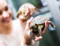 Client féminin observant deux petites tortues Image libre de droits