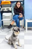 Client waiting with her pet in a veterinary clinic. Client waiting with her miniature schnauzer in a veterinary clinic women healthcare medical medicine stock photos