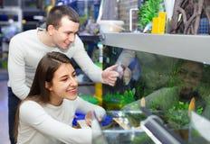 Clienti sorridenti positivi felici che selezionano pesce tropicale Fotografie Stock