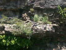 cliff Στοκ Φωτογραφία