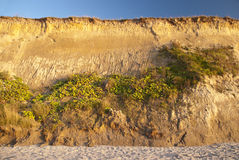 Cliff in Ahrenshoop Royalty Free Stock Photo