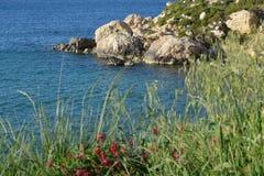 Cliff behind wonderfull vegetation (Malta). Stone cliff behind wonderfull vegetation (Malta) - Selmun Bay Stock Photos