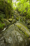 Cliff Branch Falls, Great Smoky Mtns NP Stock Photography