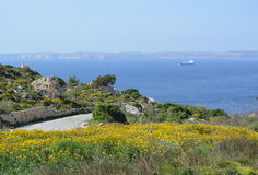Cliff with colorful meadow (Malta). Colorful field with yellow flowers. Mediterranean Sea with ferry on horizont. Near to Fomm ir-Rih Bay Stock Photography